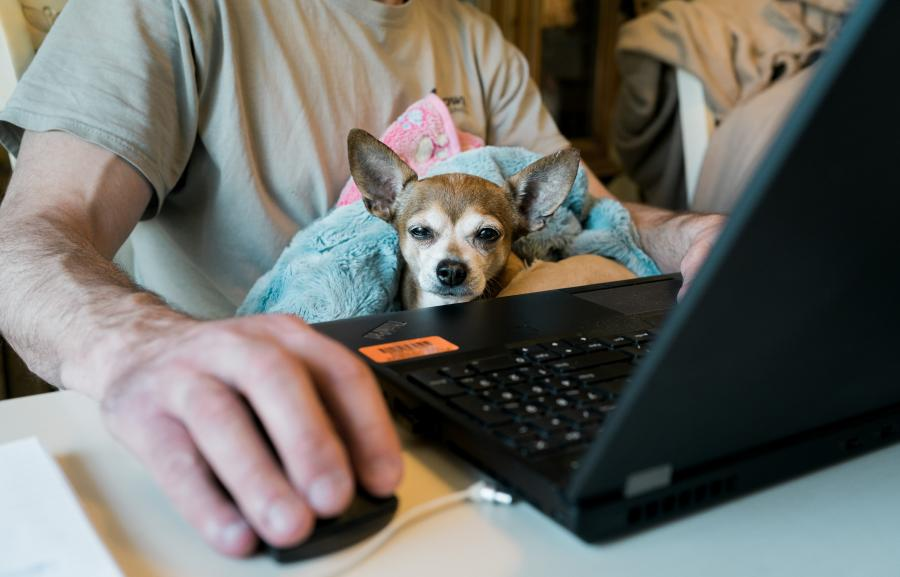man working from home during COVID with a small dog on his lap